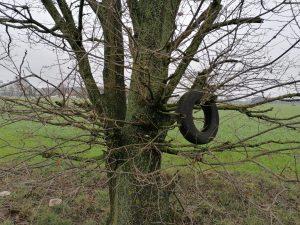 Ein Gummireifen hängt in den Ästen eines Baumes